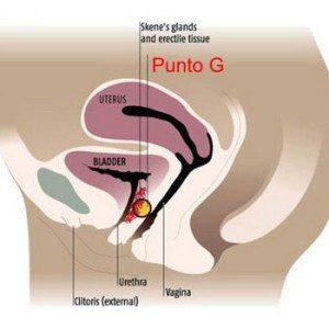 punto-g2